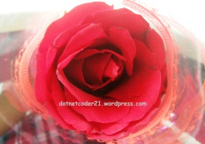 ♥ lovely rose ♥